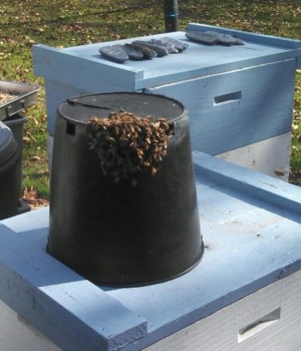 bee bucket