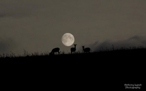 SOURCE: http://www.space.com/22882-harvest-moon-photos-september-full-moon-2013.html