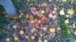 orange ball in leaves