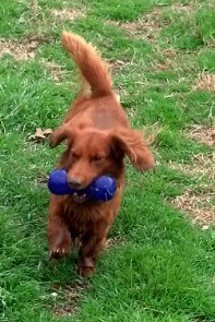 tuck's new toy