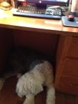 toby under desk