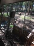 bear away2