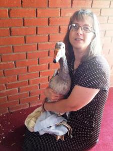 goose handler